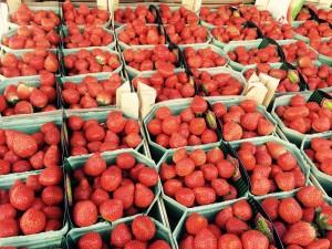 Bloesemtocht aardbeien
