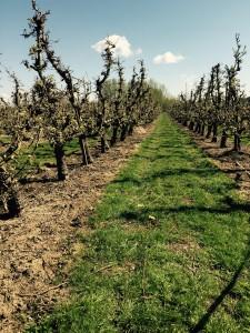 Bloesemtocht boomgaarden